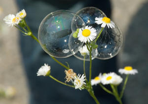Flowers in a bubble by Flickrs FotoDawg